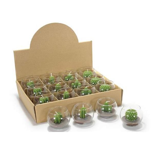 Piante Bomboniere Fai Da Te : Bomboniere piante grasse laurea idee per il design della
